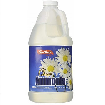 How to Get Rid of Gnats: Ammonia