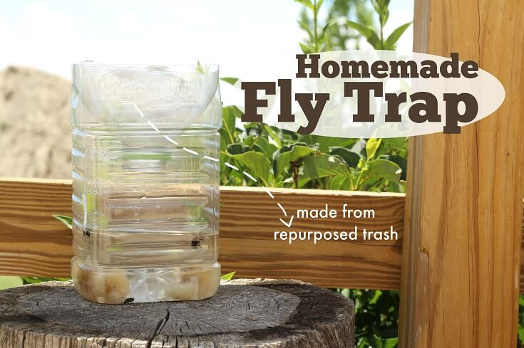 How to Get Rid of Flies: Fly Baits and Traps