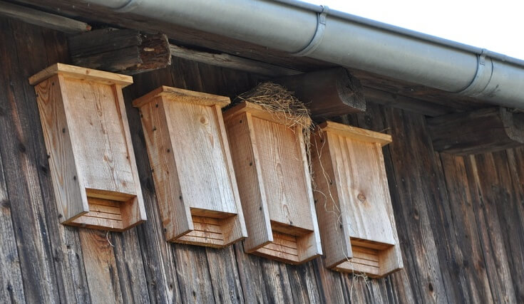 How to Keep Mosquitoes Away: Hang Bat and Bird Houses