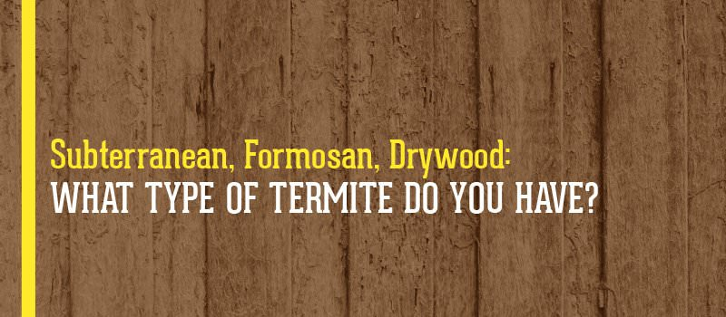 How to Kill Termites: Identify the Type of Termites