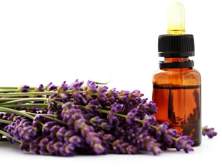 How to Kill Mosquitoes: Lavender Oil and Tea Tree Oil