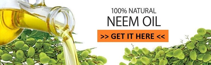 How to Kill Termites: Using Neem Oil