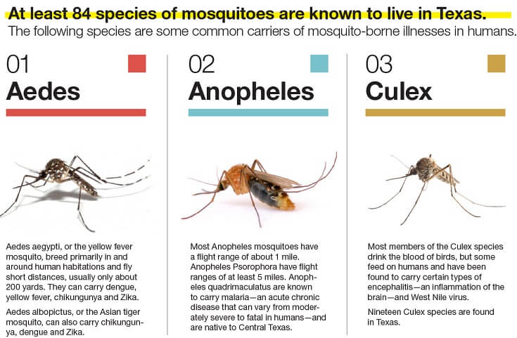 Common Varieties of Mosquitoes