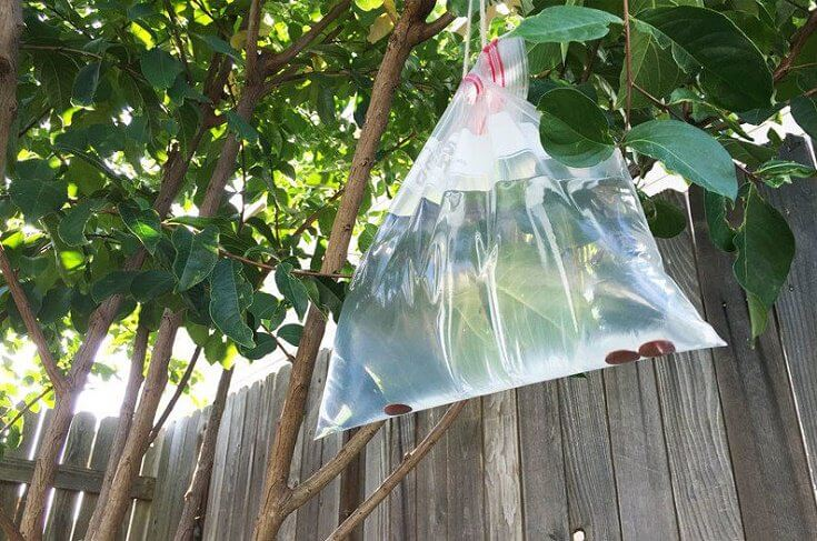 How to Get Rid of Flies: Water-Filled Plastic Bags