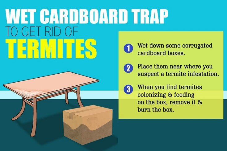 How to Kill Termites Naturally: Using Wet Cardboard Trap
