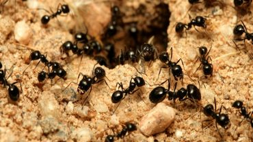 how to get rid of fire ants top 15 easy ways you can do today. Black Bedroom Furniture Sets. Home Design Ideas