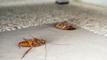 Natural Roach Killer