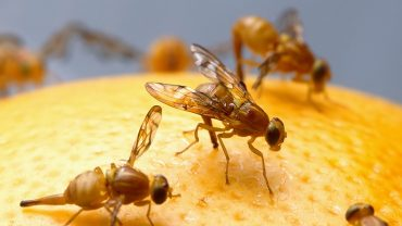 What Kills Fruit Flies